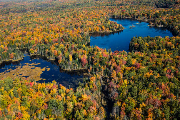 Aerial view of Canadian national park in autumn.