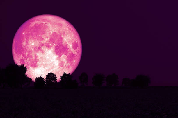 Full Strawberry Moon back silhouette trees in the field, Elements of this image furnished by NASA